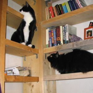 Mao and Ursus exploring the newly empty bookshelves