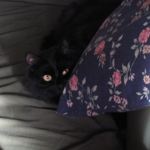Ursus hiding behind a pillow